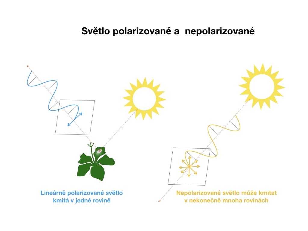 Fototahák  Všechno o polarizačním filtru - foťte ještě lépe ... 4e78b5ae666